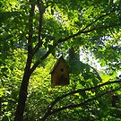 A Birdhouse in the Forest by Betty Mackey