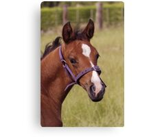 Portrait of a Playful Young Foal  Canvas Print