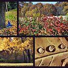 October in Ohio by Sheri Nye