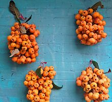 Loquat on Teal-Painted Wall by Barbara Wyeth