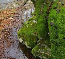 Autumn Moss by demigod