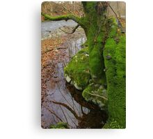 Autumn Moss Canvas Print