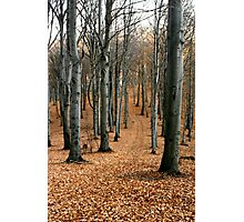 A walk in the autumn forest. Photographic Print