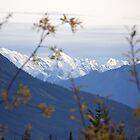 unknown peak yukon territory canada by francis  carter