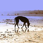 Gorgeous Greyhounds by Sally J Hunter by Sally J Hunter