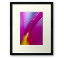 Tulip Flower Close-up Framed Print