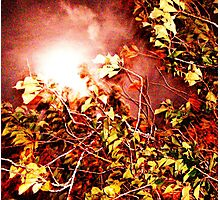Autumn Blinded Photographic Print