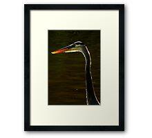 Avian Beauty ~ Part One Framed Print