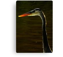 Avian Beauty ~ Part One Canvas Print