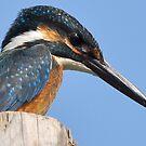 Kingfisher 3 by Tony Wong
