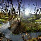 Autumn Spring by Igor Zenin