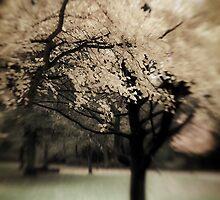 Autumn tree by Steve Barnes