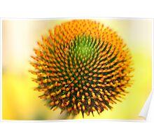 Flower: Echinacea II Poster