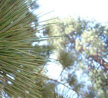 Pine tree by maxrandall