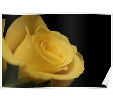 Flower: Yellow Rose II Poster