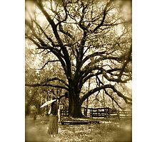 Tree Photographic Print