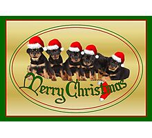 Merry Christmas Rottweiler Puppies Greeting Card Photographic Print