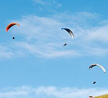 Paragliders with cows by Robert Munro