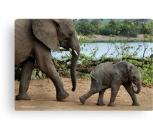 I CAN'T WALK FASTER ! - THE AFRICAN ELEPHANT – Loxodonta Africana Canvas Print