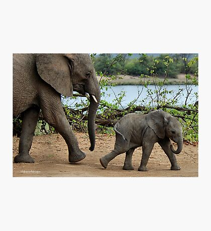 I CAN'T WALK FASTER ! - THE AFRICAN ELEPHANT – Loxodonta Africana Photographic Print