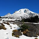 Majestic Mt. Hood by Marita Sutherlin
