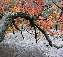 Fingers of Fall  Port Sydney,Ontario Canada by eoconnor