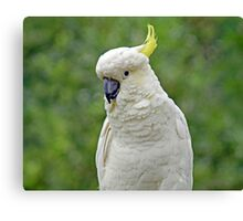 The Cockatoo Canvas Print