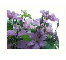 Lavender Clematis Art Print