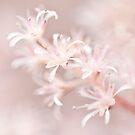 Summer Blossom by Sarah-fiona Helme