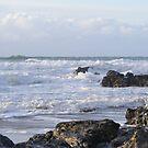 heavey swell by Amanda320