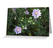 Wild Mallow  Greeting Card