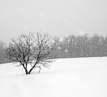 Lone Tree in Snow by Mike Donovan