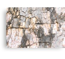 Springtime Bark Study No. 1 Canvas Print