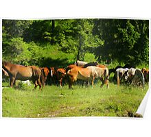 Herd of horses in the green forest. Poster
