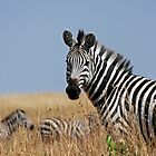 Inquisitive Zebra by daisymae