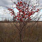 Crabby tree by tanmari