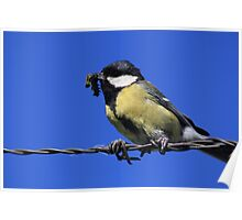 Tomtit with caterpillar Poster