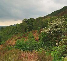 Glen Trool by WatscapePhoto