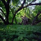 Pinhole Study: Shaded Gem by The Grand River by Max Buchheit