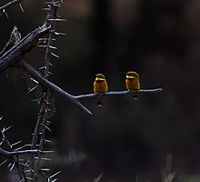 Little Bee-eater, Serengeti, Tanzania  by Carole-Anne