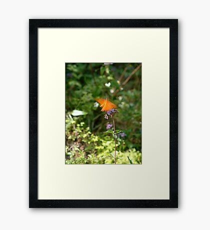 Beautiful Blur - the Butterfly as Abstract Art Framed Print