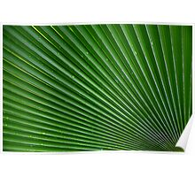 Nature's Accordian Poster