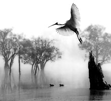 """ Spoonbill Landing"" by Mike Larder"