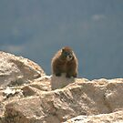 Marmot Sitting on Top of the World  by Susan Russell