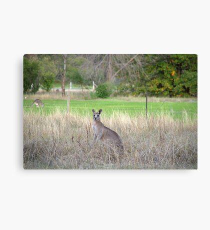 Kangaroos Canvas Print