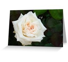 White Rose With Natural Garden Background Greeting Card