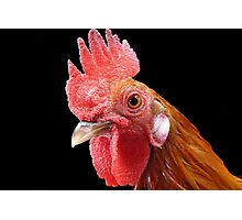 Cluck! © Photographic Print