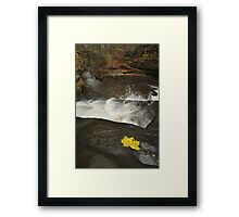 Lone Maple Leaf and Waterfall Framed Print