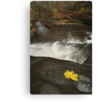 Lone Maple Leaf and Waterfall Canvas Print