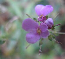 A pinch of purple! by MarianBendeth